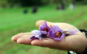 چگونه عصاره زعفران را بفروشیم