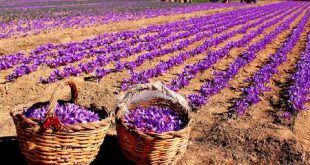 خرید اسپری عصاره زعفران دکتر بیز باکیفیت