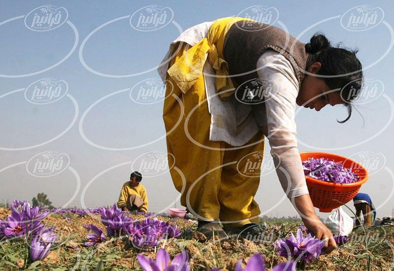 پخش زعفران مصطفوی با قیمت ویژه