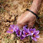 سفارش زعفران بهرامن پاکتی به صورت اینترنتی