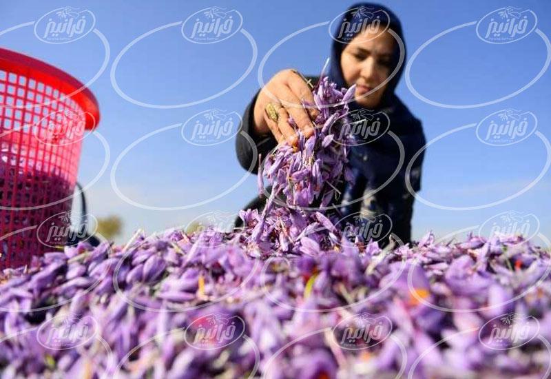 انواع اسانس زعفران مشهد با درجه کیفی عالی