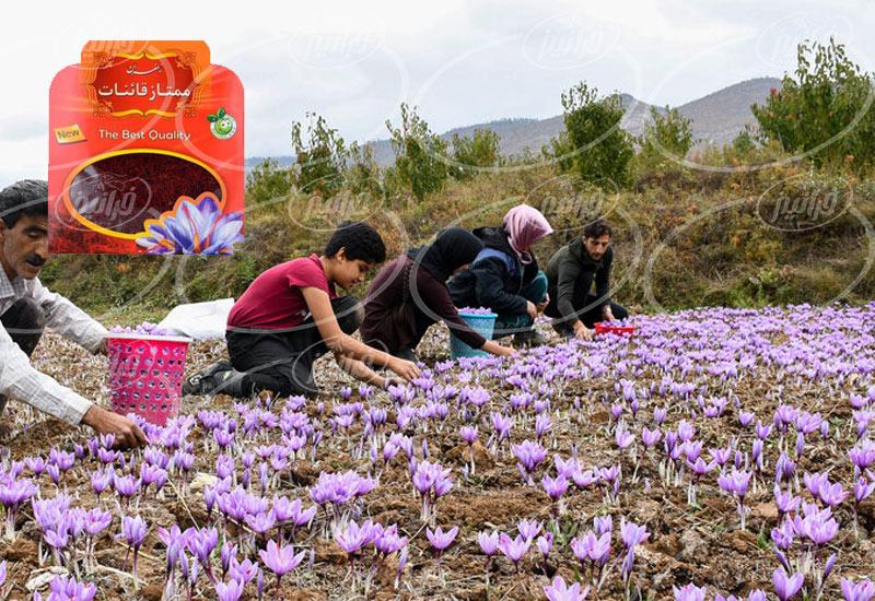 بازرگانی پودر زعفران قائنات به صورت مجازی