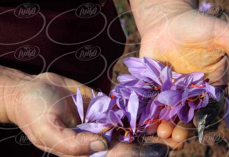 دریافت حجم عمده از بهترین زعفران دنیا