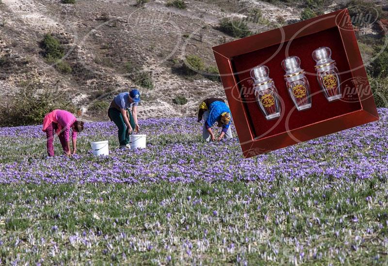 اطلاع از قیمت پودر زعفران سحرخیز